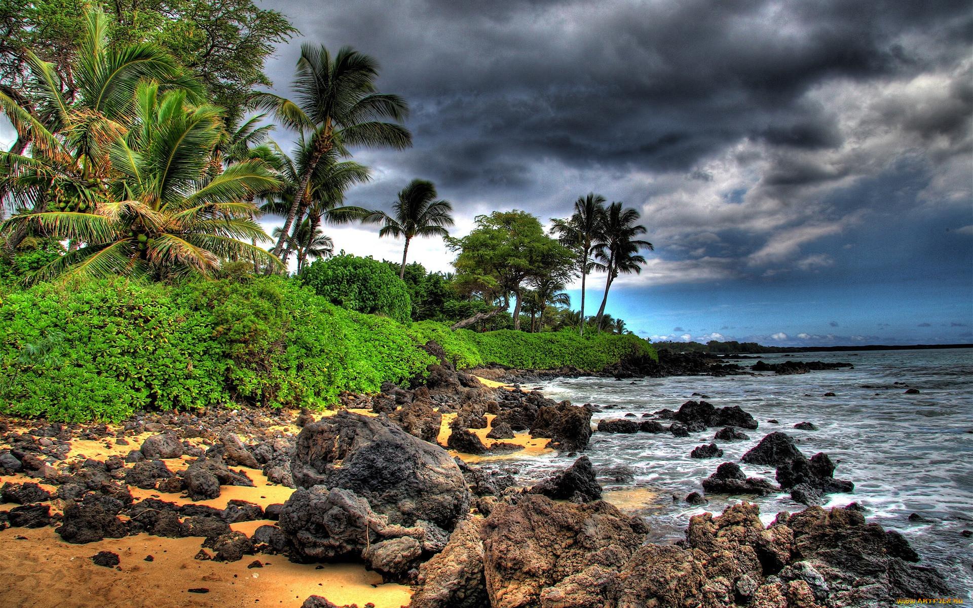 самаре фото тропиков островов колхозы, выросли
